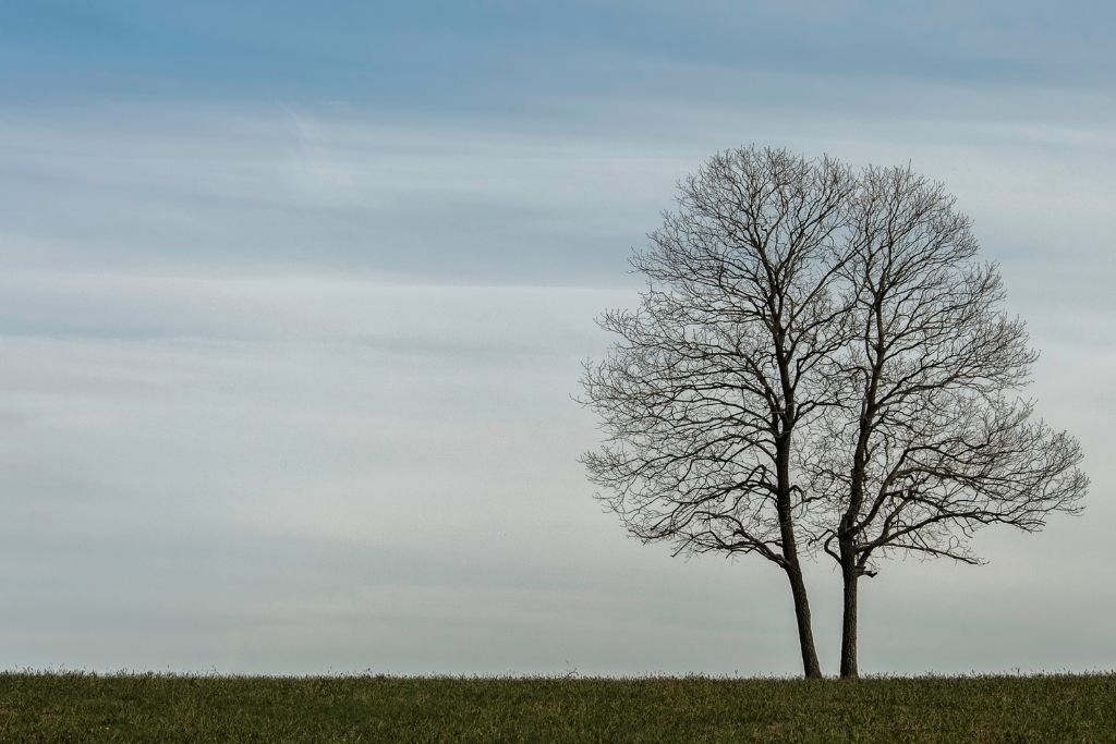 Become a tree