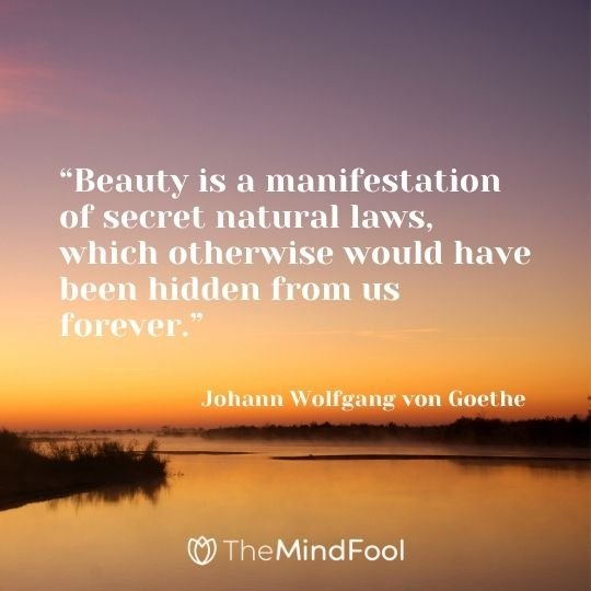 """""""Beauty is a manifestation of secret natural laws, which otherwise would have been hidden from us forever."""" – Johann Wolfgang von Goethe"""