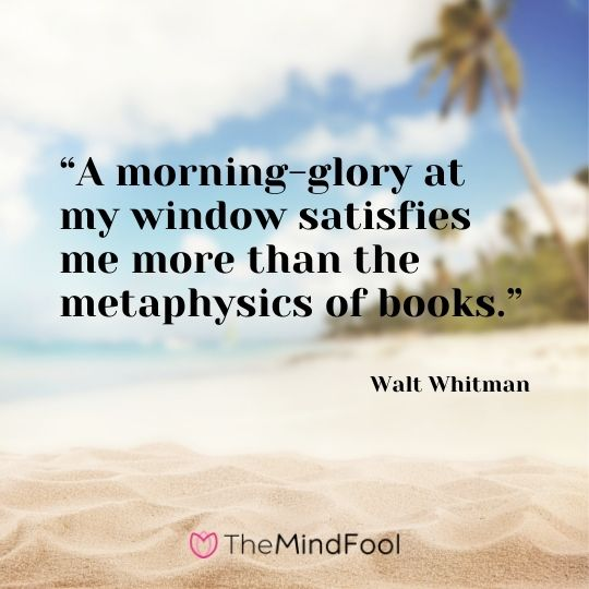"""""""A morning-glory at my window satisfies me more than the metaphysics of books."""" ― Walt Whitman"""