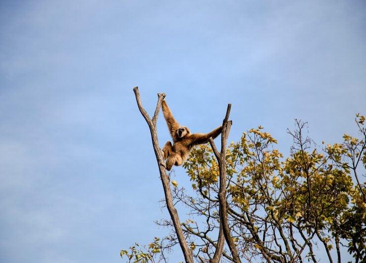 Monkey branching