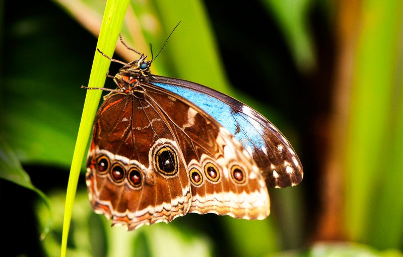 brown butterfly meaning i.e. what does a brwon butterfly mean