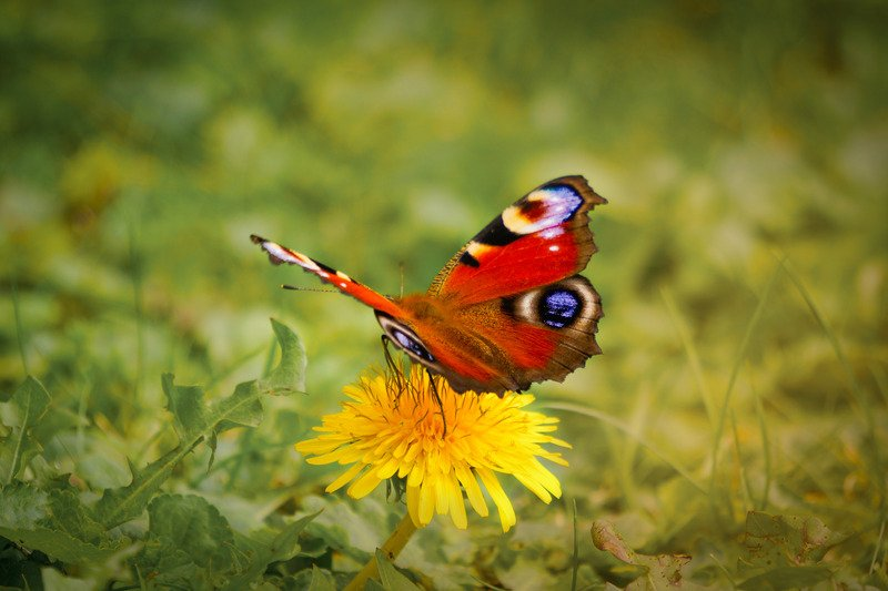 red butterfly meaning i.e. what does a red butterfly mean