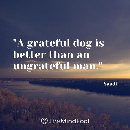 """""""A grateful dog is better than an ungrateful man."""" - Saadi"""