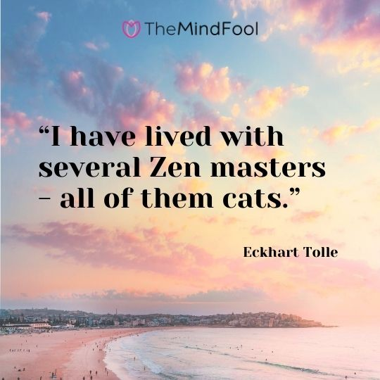 """I have lived with several Zen masters - all of them cats."" - Eckhart Tolle"