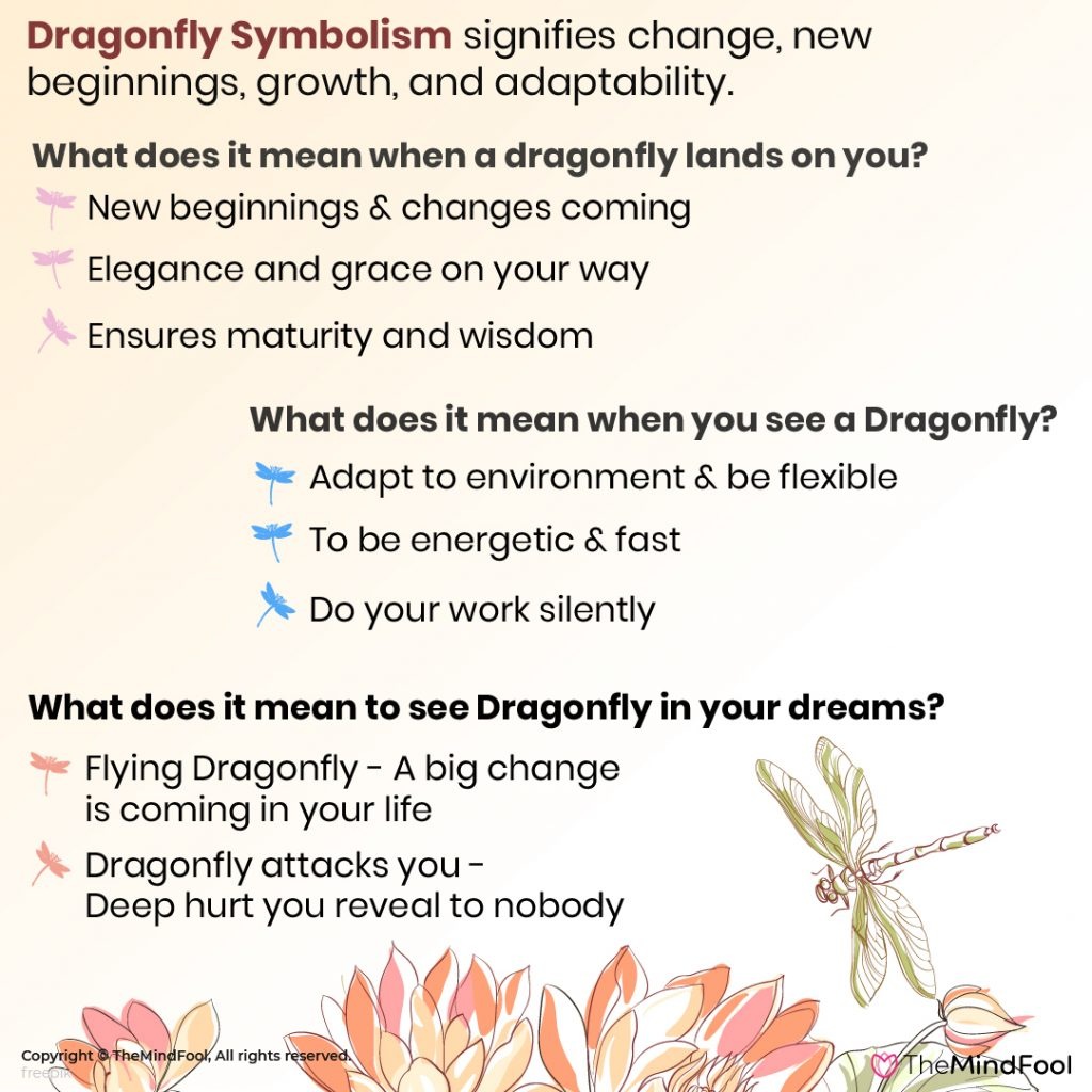 Complete Guide to Understanding Dragonfly Meaning & Symbolism