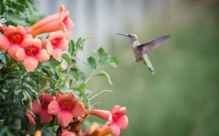 Hummingbird Meaning and Symbolic Omen
