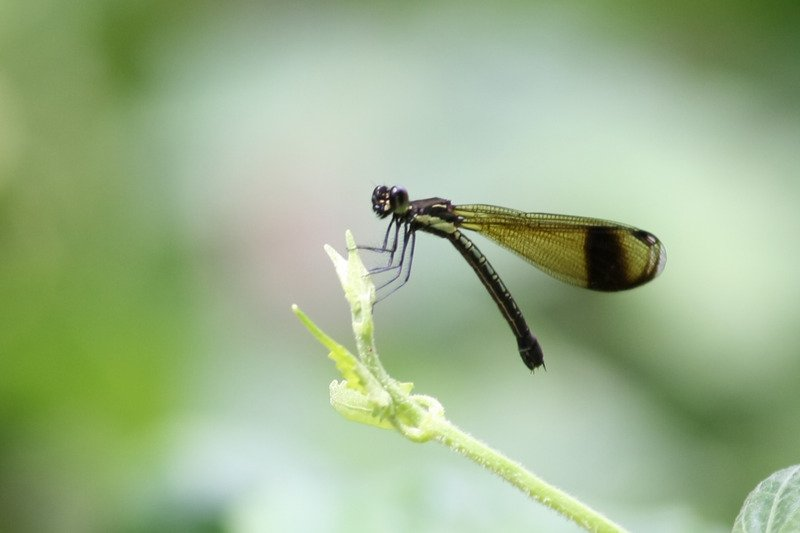 What Does It Mean To See Dragonfly in Your Dreams?