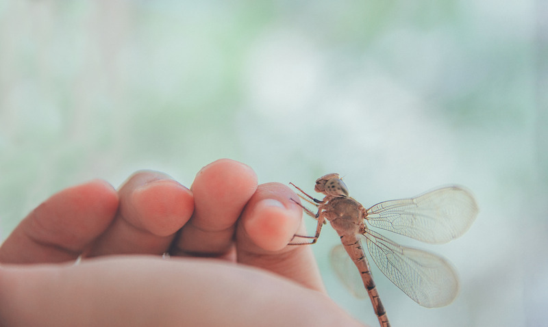 What Does It Mean When A Dragonfly Lands On You
