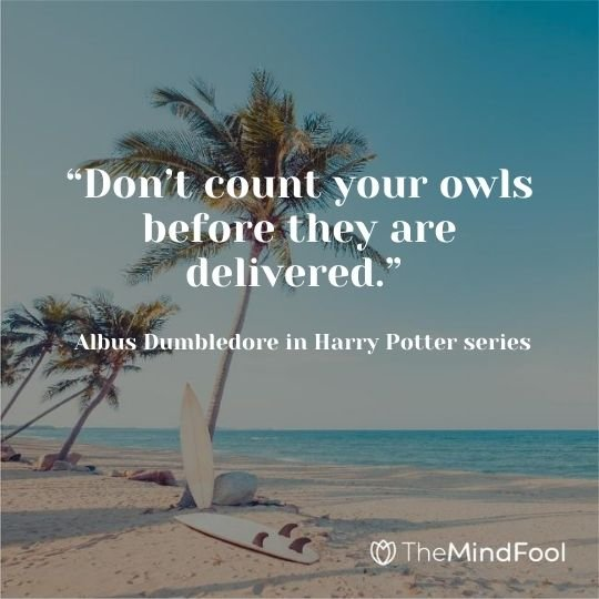 """""""Don't count your owls before they are delivered."""" ~ Albus Dumbledore in Harry Potter series"""