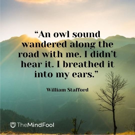 """""""An owl sound wandered along the road with me. I didn't hear it. I breathed it into my ears."""" – William Stafford"""