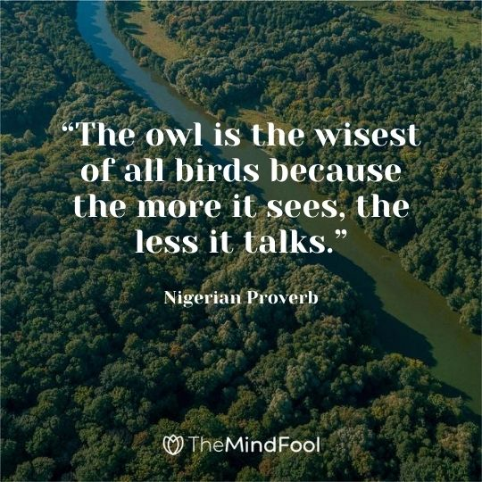 """""""The owl is the wisest of all birds because the more it sees, the less it talks."""" –Nigerian Proverb"""