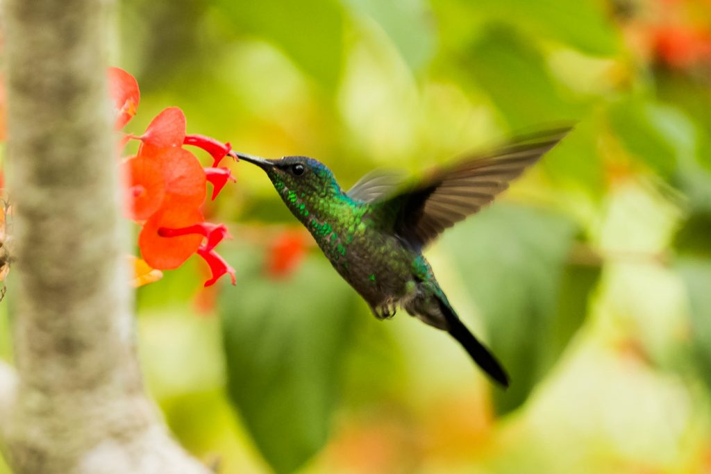 Green hummingbird symbolizes growth and prosperity.