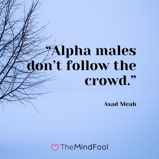 """Alpha males don't follow the crowd."" --  Asad Meah"
