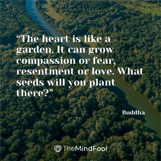 """""""The heart is like a garden. It can grow compassion or fear, resentment or love. What seeds will you plant there?"""" – Buddha"""