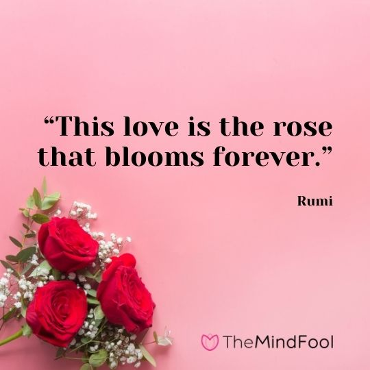 """""""This love is the rose that blooms forever."""" – Rumi"""