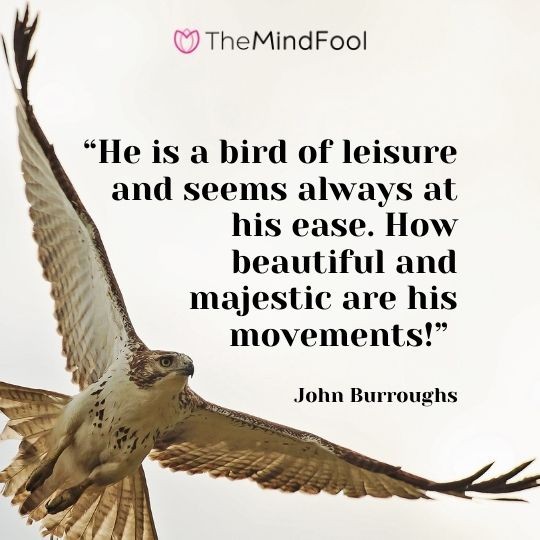 """He is a bird of leisure and seems always at his ease. How beautiful and majestic are his movements!"" – John Burroughs"