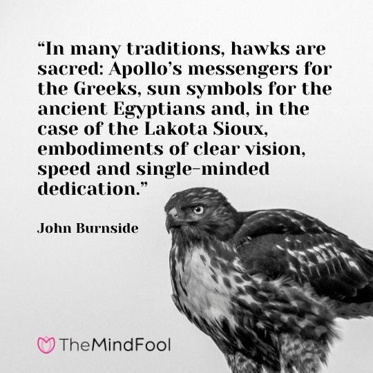 """In many traditions, hawks are sacred: Apollo's messengers for the Greeks, sun symbols for the ancient Egyptians and, in the case of the Lakota Sioux, embodiments of clear vision, speed and single-minded dedication."" – John Burnside"