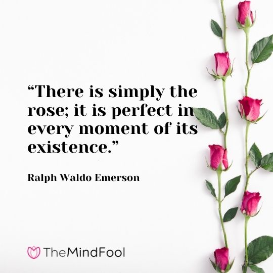 """""""There is simply the rose; it is perfect in every moment of its existence."""" --Ralph Waldo Emerson"""