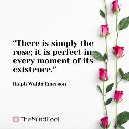 """""""There is simply the rose; it is perfect in every moment of its existence."""" – Ralph Waldo Emerson"""