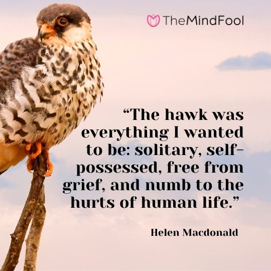 """The hawk was everything I wanted to be: solitary, self-possessed, free from grief, and numb to the hurts of human life."" – Helen Macdonald"