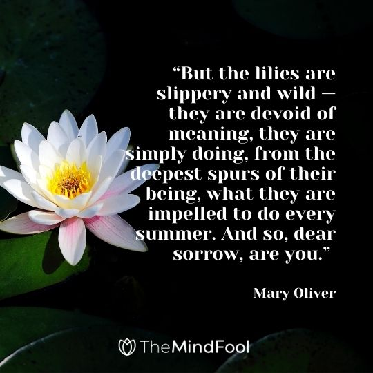 But the lilies are slippery and wild — they are devoid of meaning, they are simply doing, from the deepest spurs of their being, what they are impelled to do every summer. And so, dear sorrow, are you. -Mary Oliver