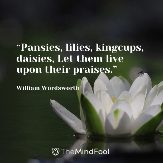 Pansies, lilies, kingcups, daisies, Let them live upon their praises. -William Wordsworth