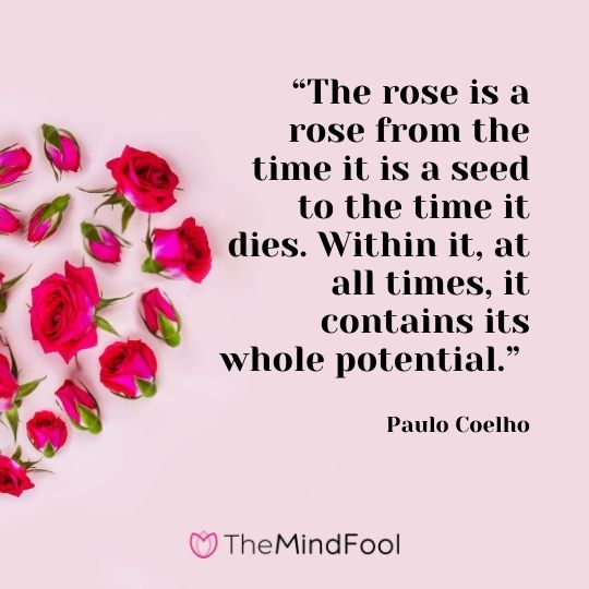 """""""The rose is a rose from the time it is a seed to the time it dies. Within it, at all times, it contains its whole potential."""" --Paulo Coelho"""