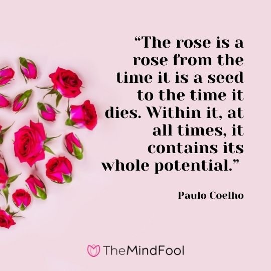 """""""The rose is a rose from the time it is a seed to the time it dies. Within it, at all times, it contains its whole potential."""" – Paulo Coelho"""