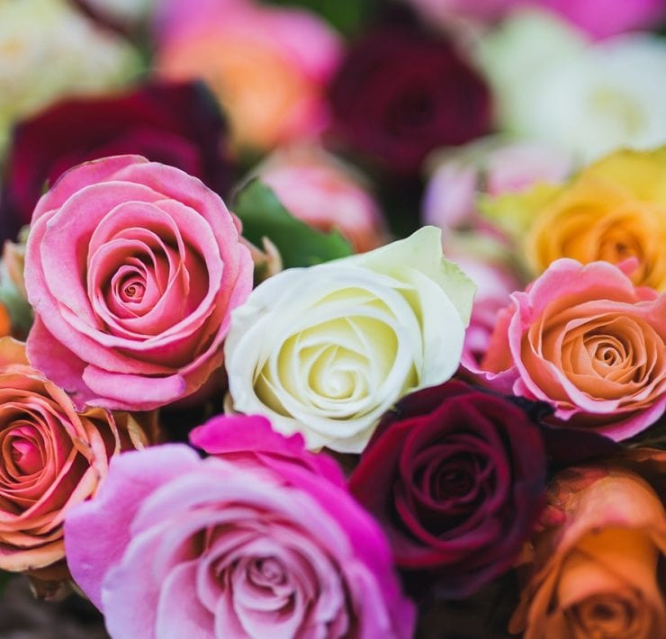 Rose Meaning