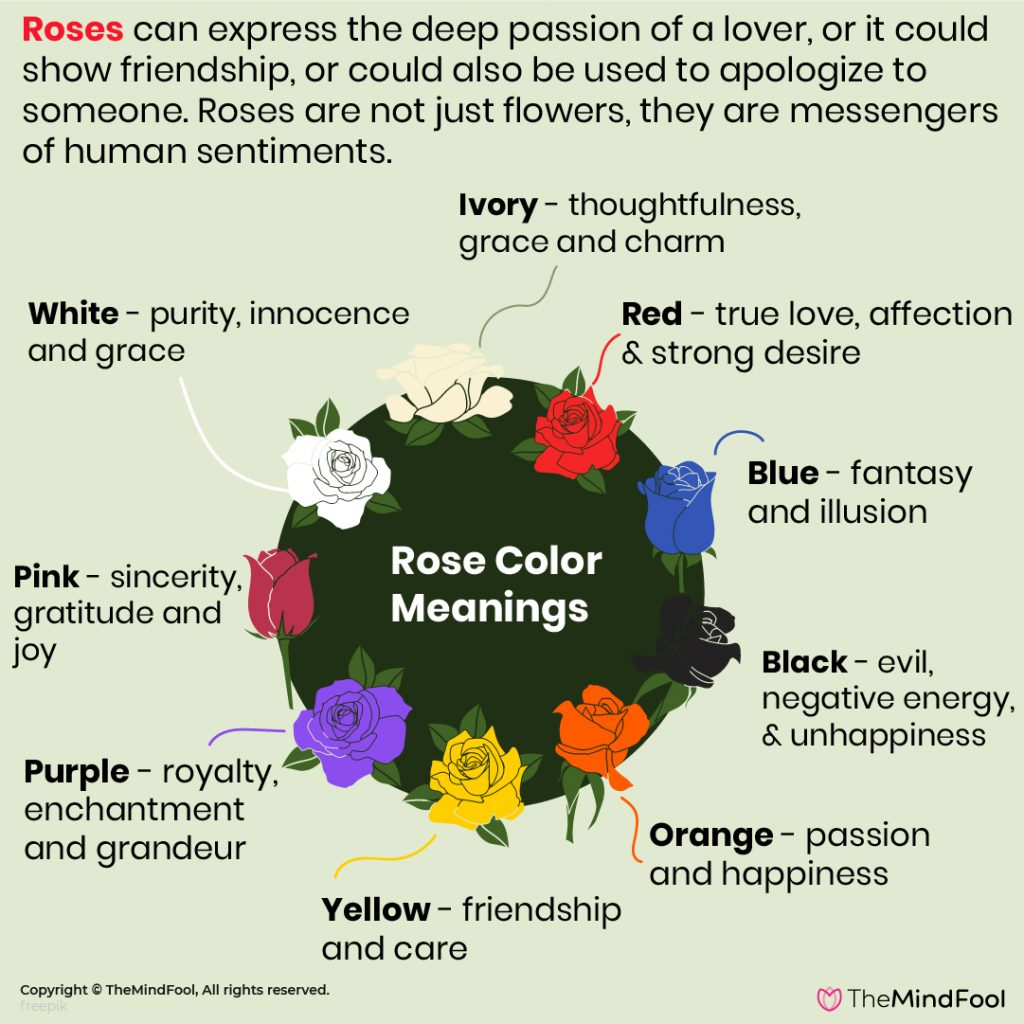 Rose Flower Symbolism & The Complete Guide to Rose Color Meanings