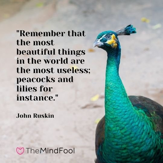 """""""Remember that the most beautiful things in the world are the most useless; peacocks and lilies for instance."""" - John Ruskin"""