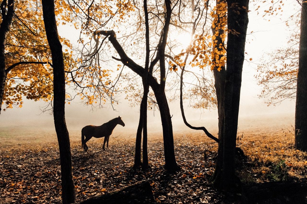 Horse Symbolism