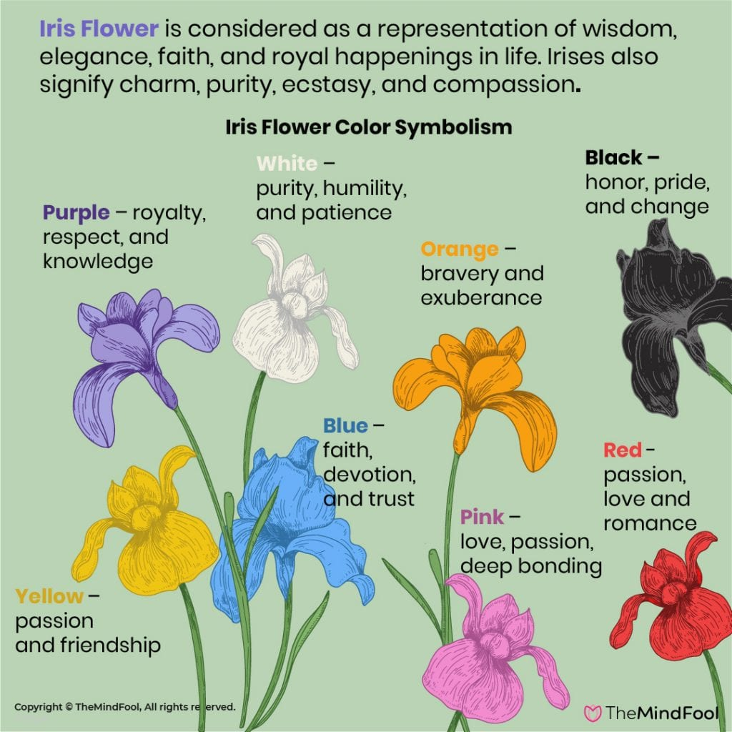 Iris meaning and symbolism – An Imperial Bloom