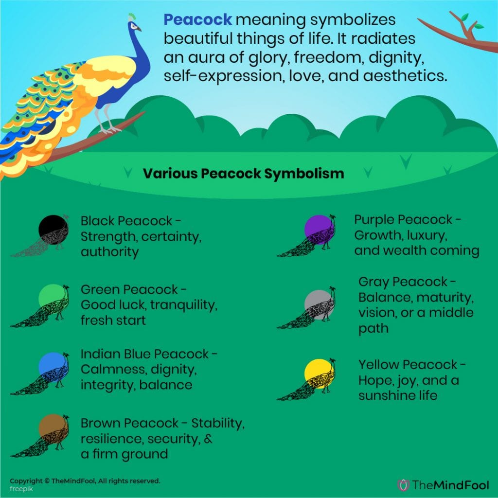 Peacock Meaning & Symbolism - A Complete Guide