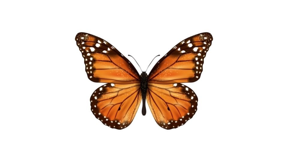 Hope Symbol: Butterfly Icon