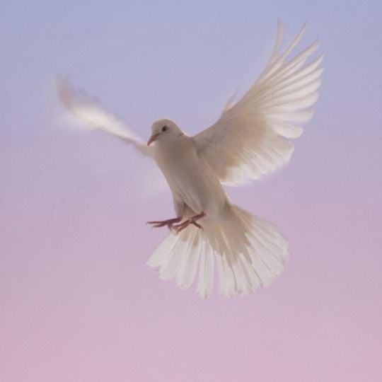 Hope Symbol- Dove