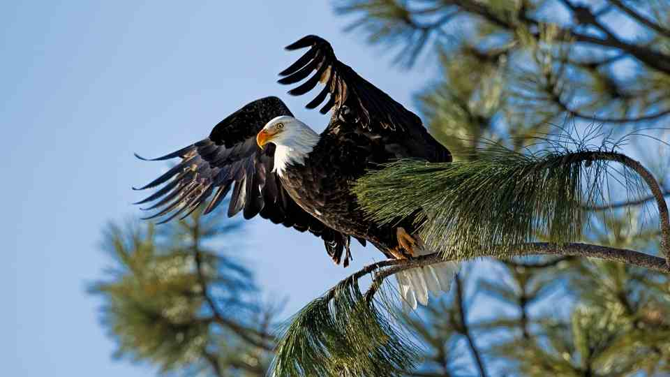 Eagle Meaning
