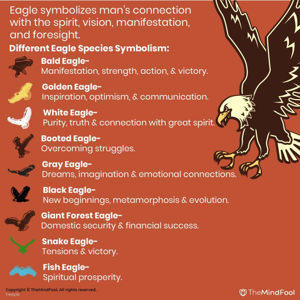 Eagle Meaning and Symbolism